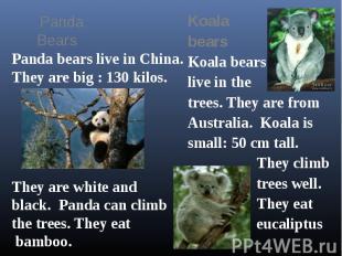 Koala bears Koala bears live in the trees. They are from Australia. Koala is sma