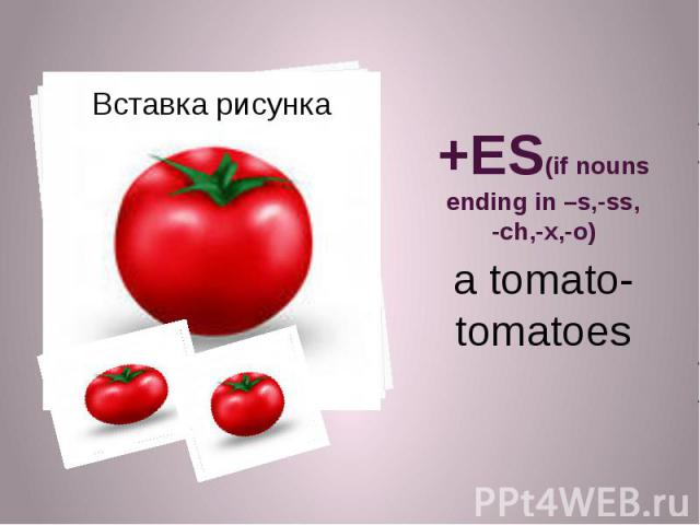 +ES(if nouns ending in –s,-ss, -ch,-x,-o) a tomato-tomatoes