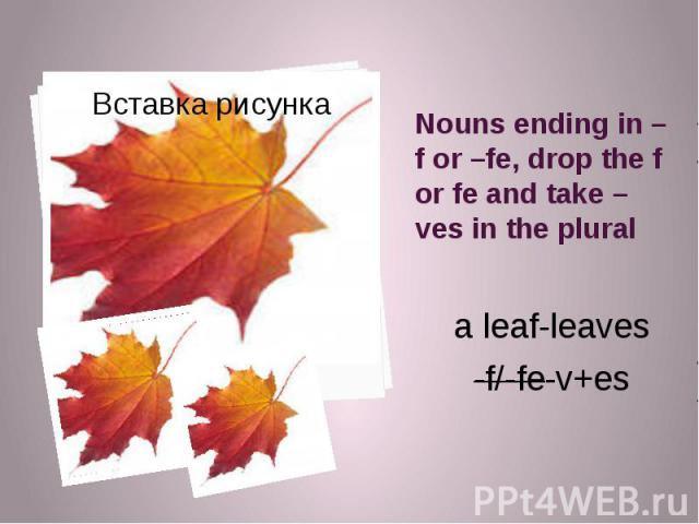 Nouns ending in –f or –fe, drop the f or fe and take –ves in the plural a leaf-leaves -f/-fe-v+es