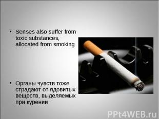 Senses also suffer from toxic substances, allocated from smoking Senses also suf