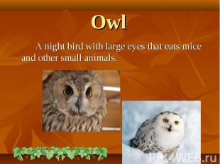 A night bird with large eyes that eats mice and other small animals. A night bir