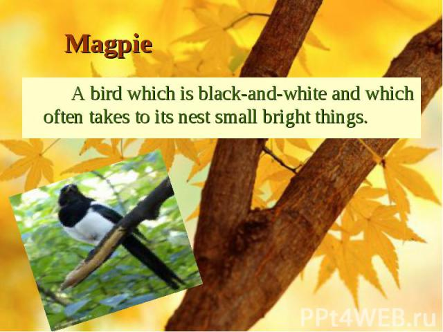 A bird which is black-and-white and which often takes to its nest small bright things. A bird which is black-and-white and which often takes to its nest small bright things.
