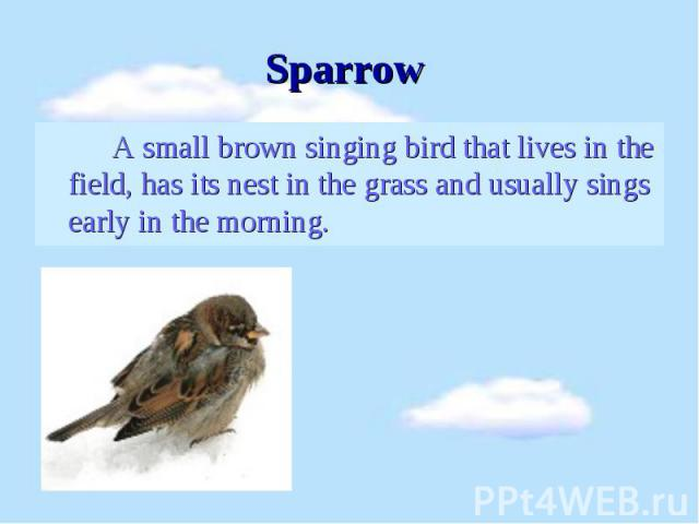 A small brown singing bird that lives in the field, has its nest in the grass and usually sings early in the morning. A small brown singing bird that lives in the field, has its nest in the grass and usually sings early in the morning.