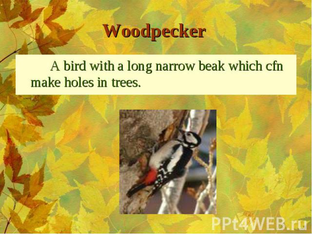 A bird with a long narrow beak which cfn make holes in trees. A bird with a long narrow beak which cfn make holes in trees.