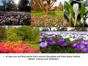 At Kew you will find plants from around the globe and from every habitat – deser