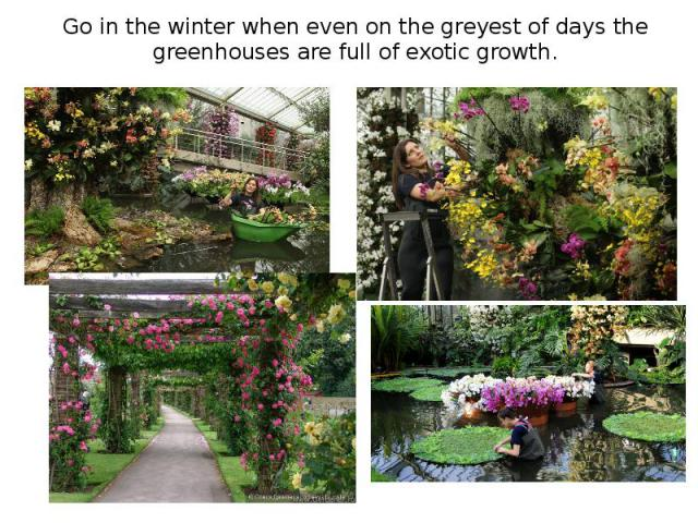 Go in the winter when even on the greyest of days the greenhouses are full of exotic growth.