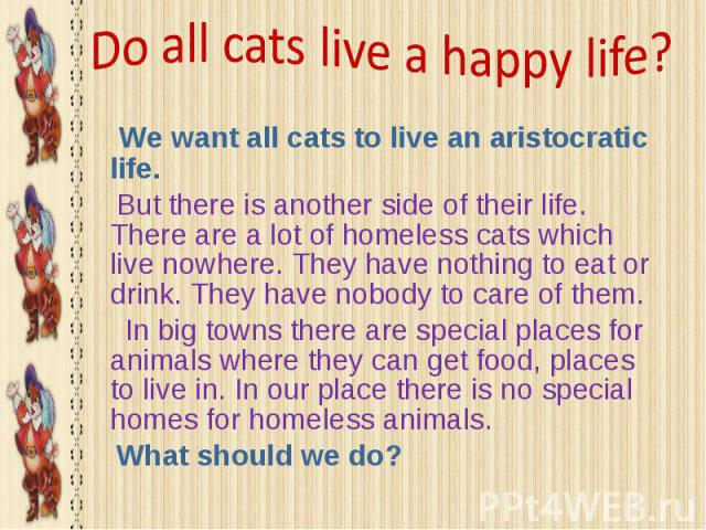We want all cats to live an aristocratic life. We want all cats to live an aristocratic life. But there is another side of their life. There are a lot of homeless cats which live nowhere. They have nothing to eat or drink. They have nobody to care o…