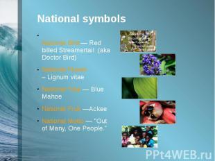 National symbols National Bird —Red billed Streamertail (aka Doctor