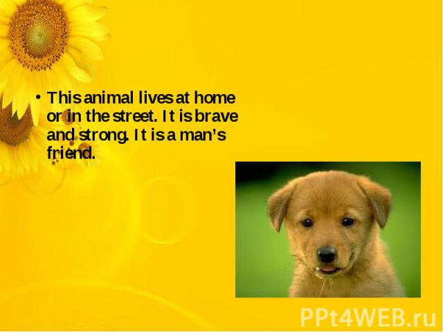 This animal lives at home or in the street. It is brave and strong. It is a man's friend.