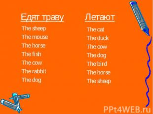 The sheep The sheep The mouse The horse The fish The cow The rabbit The dog