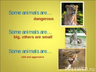 Some animals are… Some animals are… Some animals are… dangerous