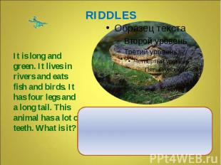 It is long and green. It lives in rivers and eats fish and birds. It has four le