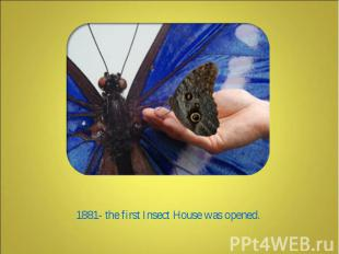 1881- the first Insect House was opened.