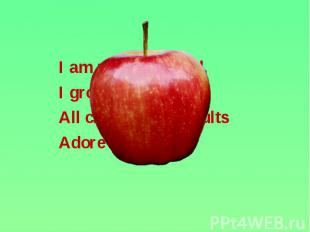 I am red and round, I am red and round, I grow on the tree. All children and adu