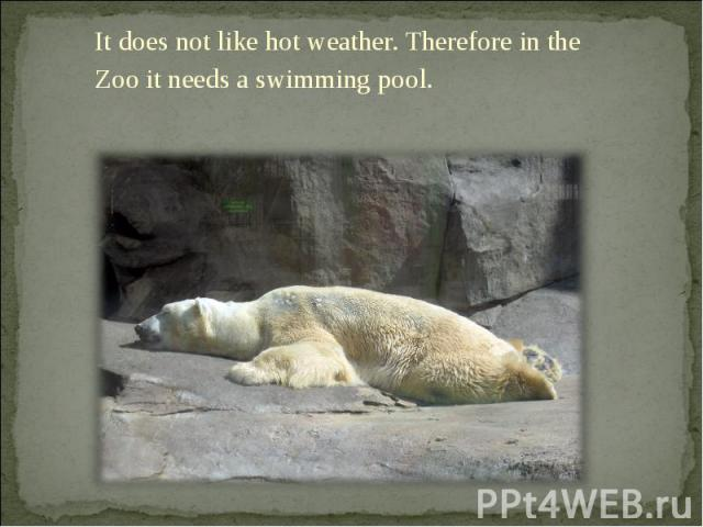 It does not like hot weather. Therefore in the Zoo it needs a swimming pool. It does not like hot weather. Therefore in the Zoo it needs a swimming pool.