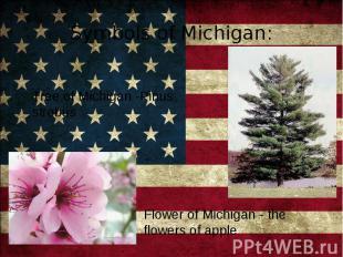 Tree of Michigan -Pinus strobus