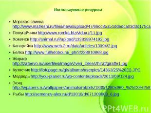 Используемые ресурсы Морская свинка http://www.matreshi.ru/files/news/upload/47/