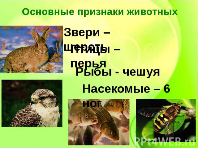 Основные признаки животных