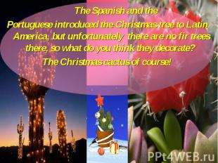 The Spanish and the The Spanish and the Portuguese introduced the Christmas tree