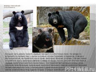 МЕДВЕДЬ ГИМАЛАЙСКИЙ (Ursus thibetanus) Большая часть ареала черного медведя прих