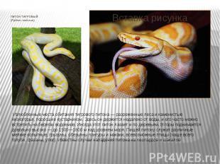 ПИТОН ТИГРОВЫЙ (Python molorus) Излюбленные места обитания тигрового питон