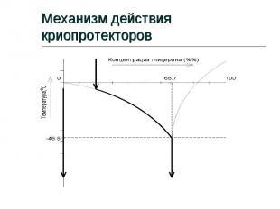 Механизм действия криопротекторов