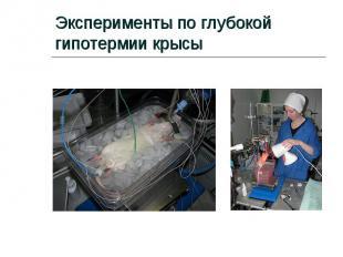 Эксперименты по глубокой гипотермии крысы