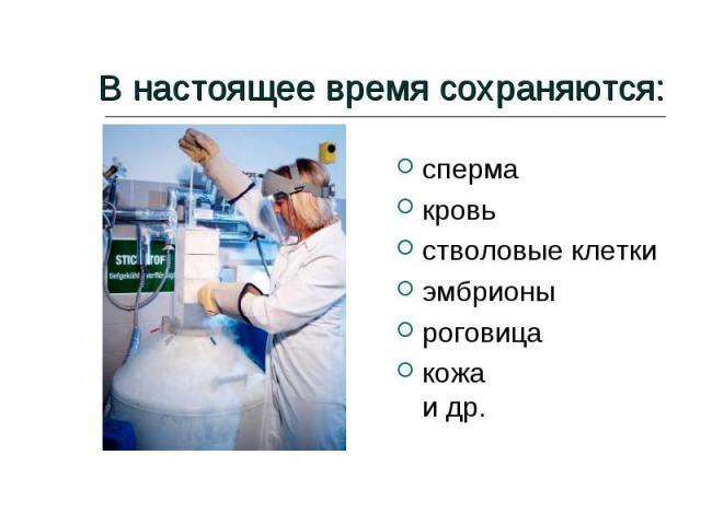В настоящее время сохраняются: сперма кровь стволовые клетки эмбрионы роговица кожа и др.