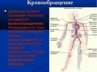 Движение крови в организме человека называется кровообращением. Непрерывность то