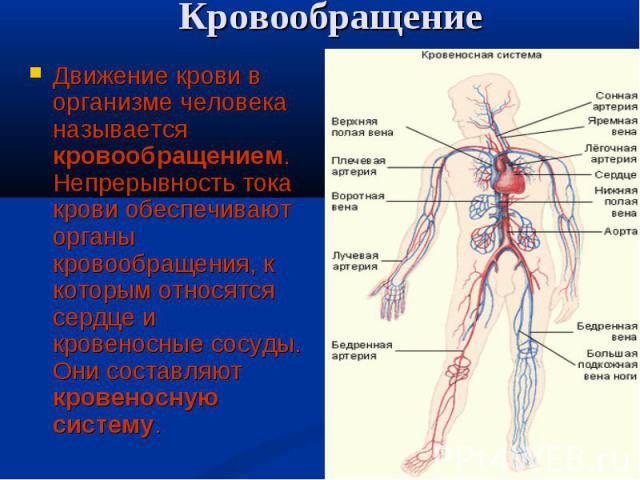 Движение крови в организме человека называется кровообращением. Непрерывность тока крови обеспечивают органы кровообращения, к которым относятся сердце и кровеносные сосуды. Они составляют кровеносную систему. Движение крови в организме человека наз…