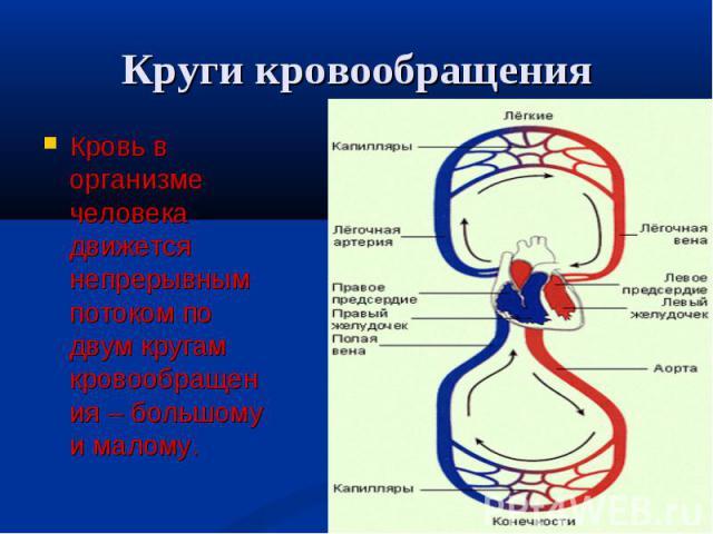 Кровь в организме человека движется непрерывным потоком по двум кругам кровообращения – большому и малому. Кровь в организме человека движется непрерывным потоком по двум кругам кровообращения – большому и малому.