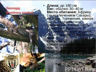 Длина: до 180 см Вес: обычно 30–40 кг Место обитания: Африка (за исключением Сах