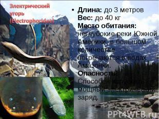 Длина: до 3 метров Вес: до 40 кг Место обитания: неглубокие реки Южной Америки,