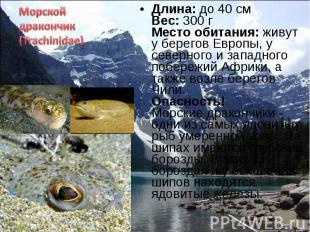 Длина: до 40 см Вес: 300 г Место обитания: живут у берегов Европы, у северного и