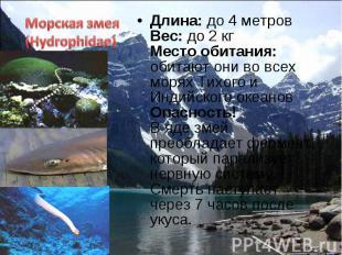 Длина: до 4 метров Вес: до 2 кг Место обитания: обитают они во всех морях Тихого