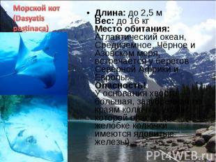 Длина: до 2,5 м Вес: до 16 кг Место обитания: Атлантический океан, Средиземное,