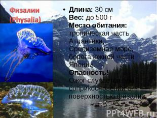 Длина: 30 см Вес: до 500 г Место обитания: тропическая часть Атлантики, Средизем