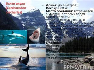 Длина: до 4 метров Вес: до 800 кг Место обитания: встречается в умеренно теплых