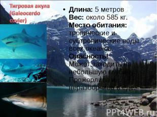 Длина: 5 метров Вес: около 585 кг. Место обитания: тропические и субтропические