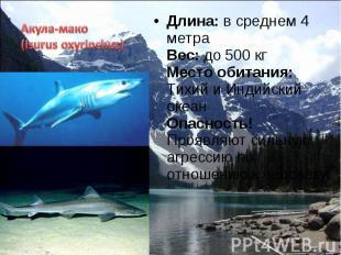 Длина: в среднем 4 метра Вес: до 500 кг Место обитания: Тихий и Индийский океан