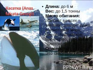 Длина: до 6 м Вес: до 1,5 тонны Место обитания: обитают во всех океанах. Заходят