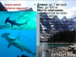 Длина: до 7 метров Вес: до 400 кг Место обитания: встречается во всех теплых мор