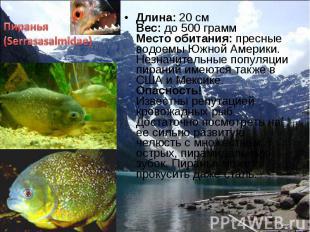 Длина: 20 см Вес: до 500 грамм Место обитания: пресные водоемы Южной Америки. Не