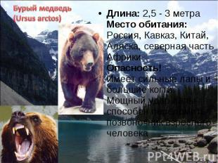 Длина: 2,5 - 3 метра Место обитания: Россия, Кавказ, Китай, Аляска, северная час