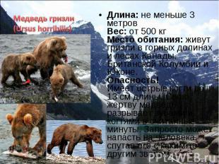 Длина: не меньше 3 метров Вес: от 500 кг Место обитания: живут гризли в горных д