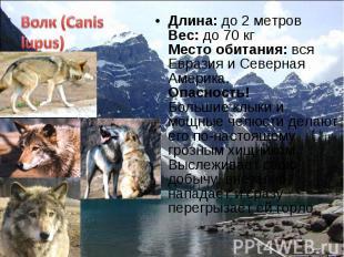 Длина: до 2 метров Вес: до 70 кг Место обитания: вся Евразия и Северная Америка.