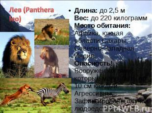 Длина: до 2,5 м Вес: до 220 килограмм Место обитания: Африка, южная области Саха