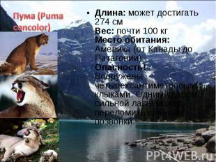 Длина: может достигать 274 см Вес: почти 100 кг Место обитания: Америка (от Кана