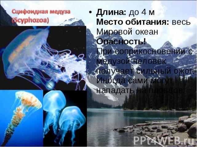 Длина: до 4 м Место обитания: весь Мировой океан Опасность! При соприкосновении с медузой человек получает сильный ожог. Иногда сами могут нападать на пловцов. Длина: до 4 м Место обитания: весь Мировой океан Опасность! При соприкосновении с медузой…