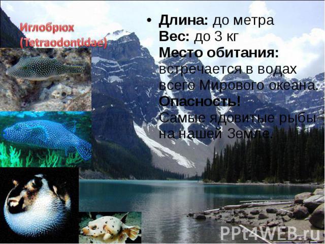 Длина: до метра Вес: до 3 кг Место обитания: встречается в водах всего Мирового океана. Опасность! Самые ядовитые рыбы на нашей Земле. Длина: до метра Вес: до 3 кг Место обитания: встречается в водах всего Мирового океана. Опасность! Самые ядовитые …